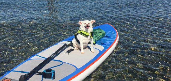 Siegfried on a paddle board